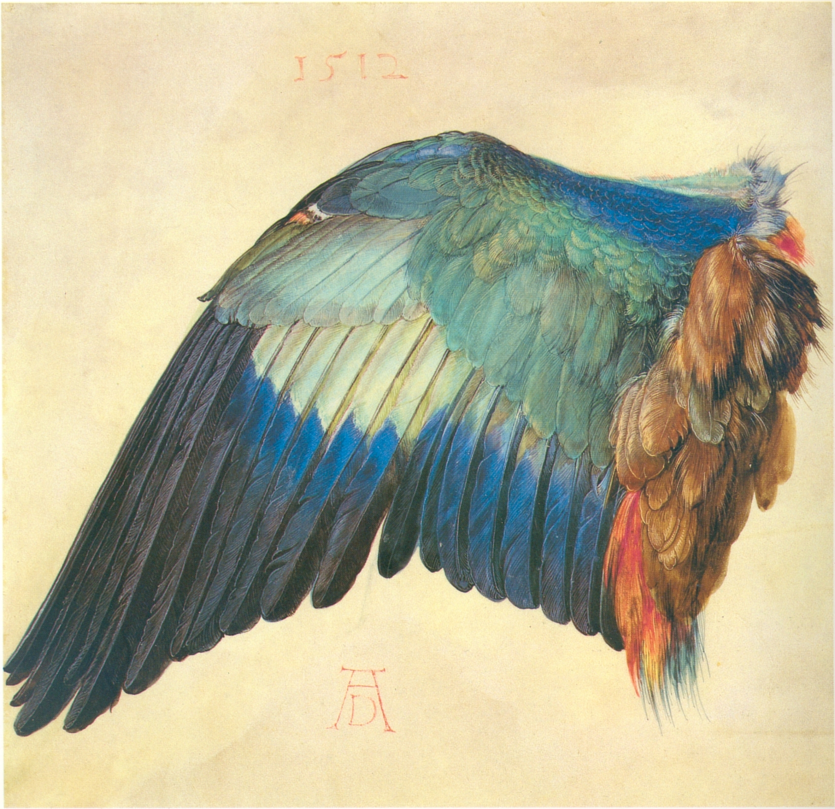 Duerer wing of a blue roller