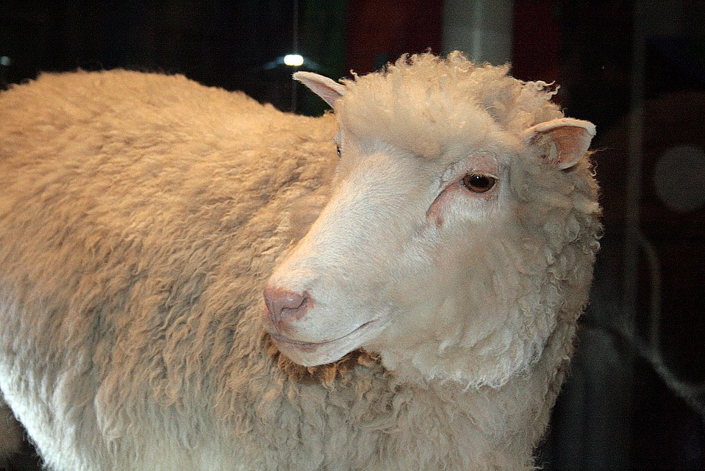 1. Theory. Fields: Philosophy of Biology, Bioethics. Image: The remains of Dolly the Sheep, the first mammal to be cloned from a cell of an adult sheep, are exhibited at the Royal Museum of Scotland.